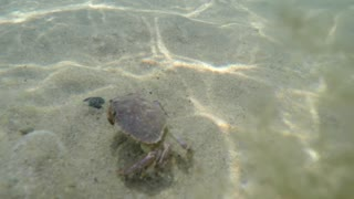 Underwater shot of an ocean crab on the sea floor bottom