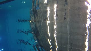 Underwater shot of athlete diving into swim pool