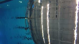 Underwater shot of man swimming through water at pool
