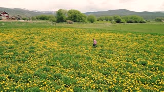 Aerial Rotating Shot Of A Cute Boy Walking Through Yellow Flowers In Field
