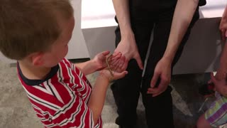 Boy Holds A Stick Bug At An In Insectarium