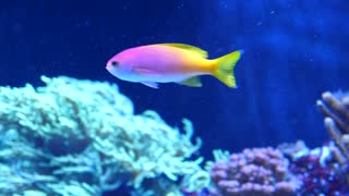 Colorful Fish Swimming In Ocean Water