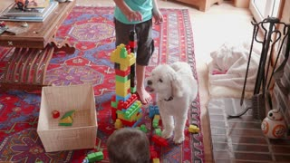 Little Brothers Playing With Building Blocks In The Living Room