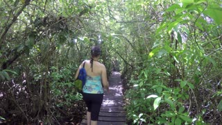 People Walking On A Path In A Mangrove Forest Jungle