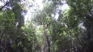Pov Walking Through A Green Lush Jungle In Mexico
