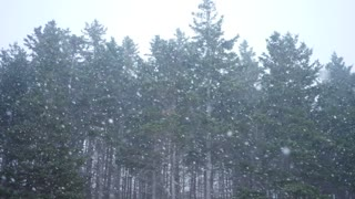 Slow motion extreme winter storm in a forest