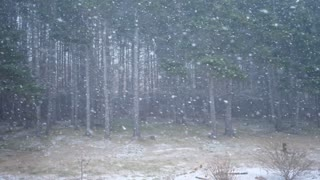 Slow motion extreme winter storm in forest