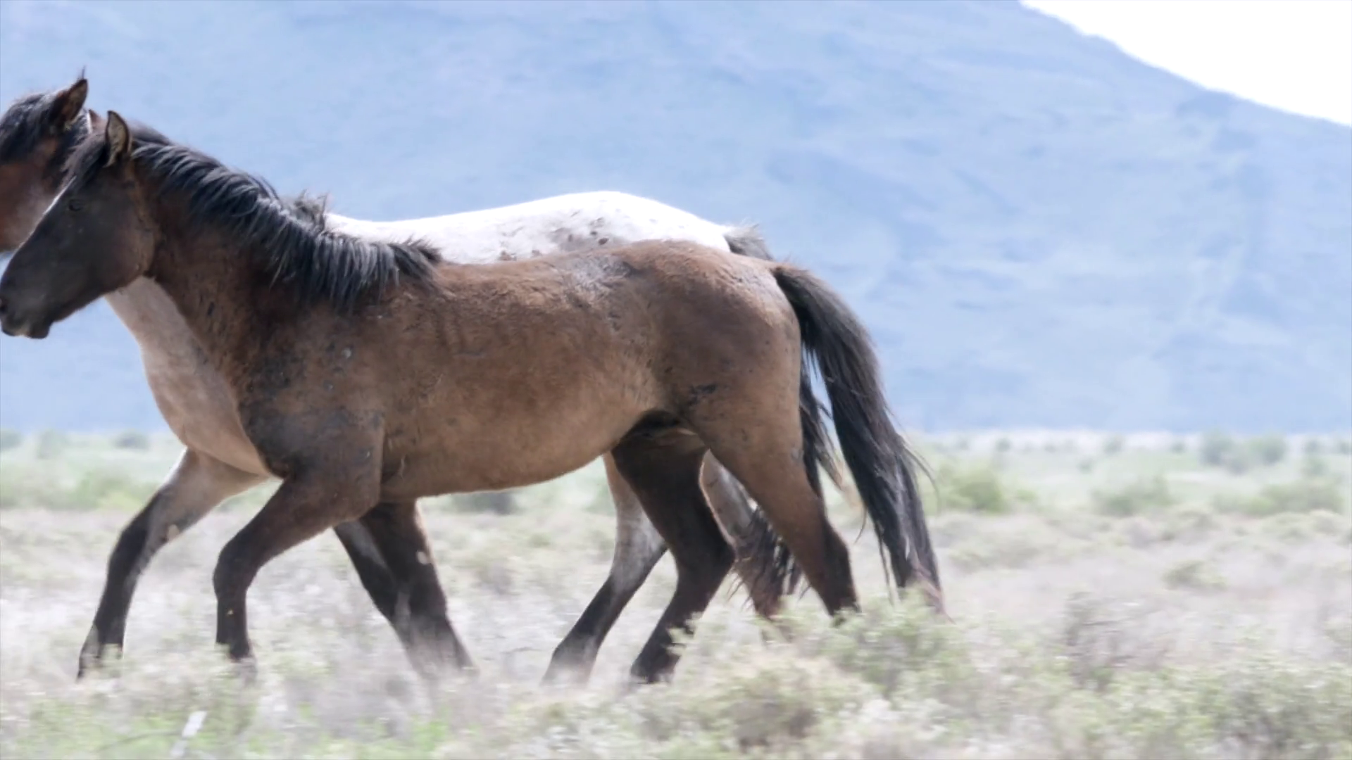 Slow Motion Of Beautiful Wild Horse Running At The West Desert In Utah Stock Video Footage Storyblocks