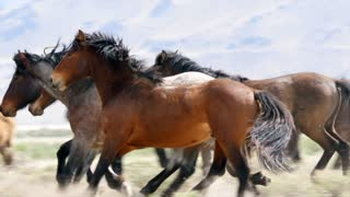 Slow Motion Of Beautiful Wild Horses Running At The West Desert In Utah