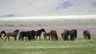 Slow Motion Of Strong Wild Horses Running In The West Desert In Utah