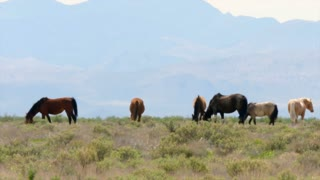 Slow Motion Of Wild Horse Herd At The West Utah Desert