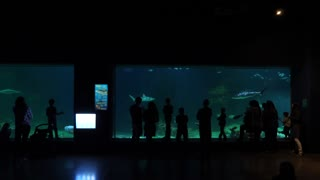 Slow Motion People Watch Sharks Swimming In Big Aquarium