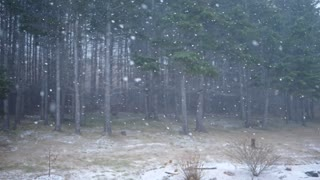 Slow motion shot extreme winter storm in forrest