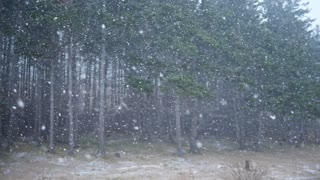 Slow motion shot of a extreme winter storm in forrest