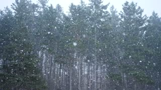 Slow motion shot of extreme winter storm in forrest