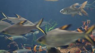 Underwater Shot Of Many Fish Swimming Through Water