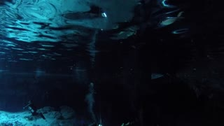 Underwater Shot Of People Scuba Diving In A Cenote Cave In Mexico