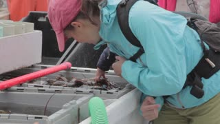 woman lets baby touch fresh lobster on a boat