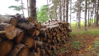Wood pile steadicam shot