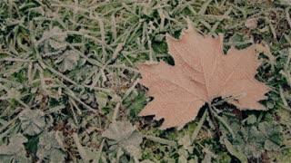 A fallen dried leaf on a ground.
