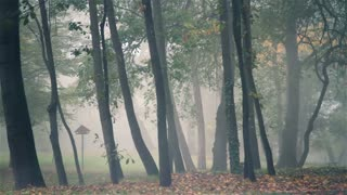 Autumn fog in forest