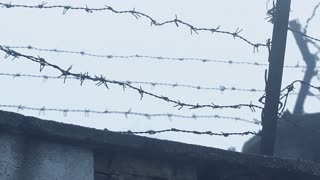 Barbed wire fence at the prison. Winter fog and snow.
