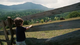 Boy standing on a green meadow and looking at some cows.