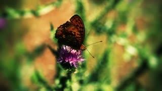Butterfly on flower 1