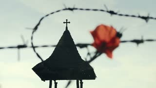Conceptual image about struggle for freedom, is represented with red poppy flower and rusty barbed wire. The clip can illustrate Persecution of Christians in the Eastern Bloc.