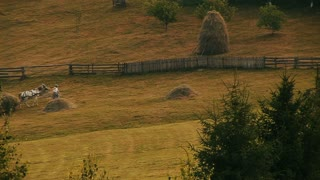 Farmer with horse and hay harvest. Romania, cca. 2010.