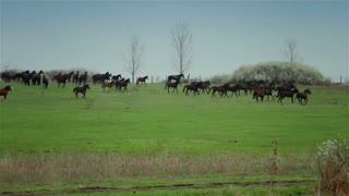 Horses on pasture 1