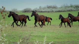 Horses on pasture 2