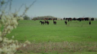Horses on pasture 3