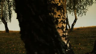 Little boy run through the trees. Slow motion footage.
