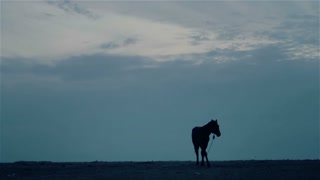 Lone horse at night.