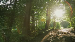 Pathway in the forest with sunlight backgrounds.