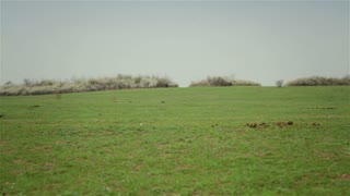 Plowed field with horses 1