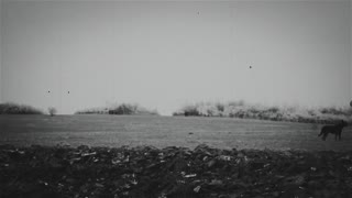 Plowed field with horses 2 - OLD