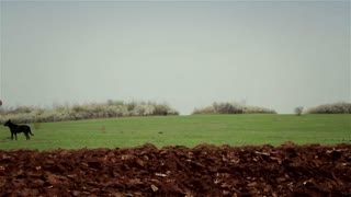 Plowed field with horses 2
