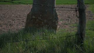 Stone Cross silhouette on a summer day. Retezat Mountain, Romania.