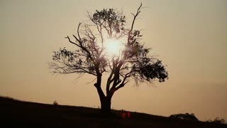 The silhouette of a dead tree in the morning sun. Long Shot