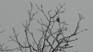 A tree branches with a dove