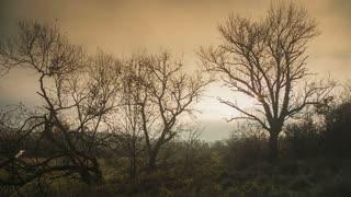 Autumn austere foggy landscape