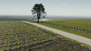 Black car running with speed through vineyard - ELS