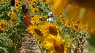 Children in sunflower field - Low Angle
