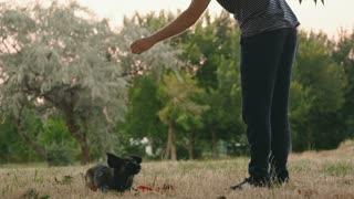 Dog training - slo mo