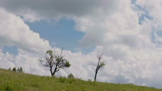 Dried trees on meadow - time lapse