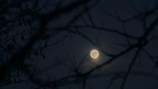 Full moon rising - time lapse