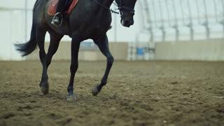 Horse legs - Close Up