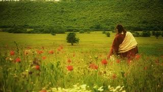 Jesus, as seen from behind, walking alone through poppy field. Long Shot.